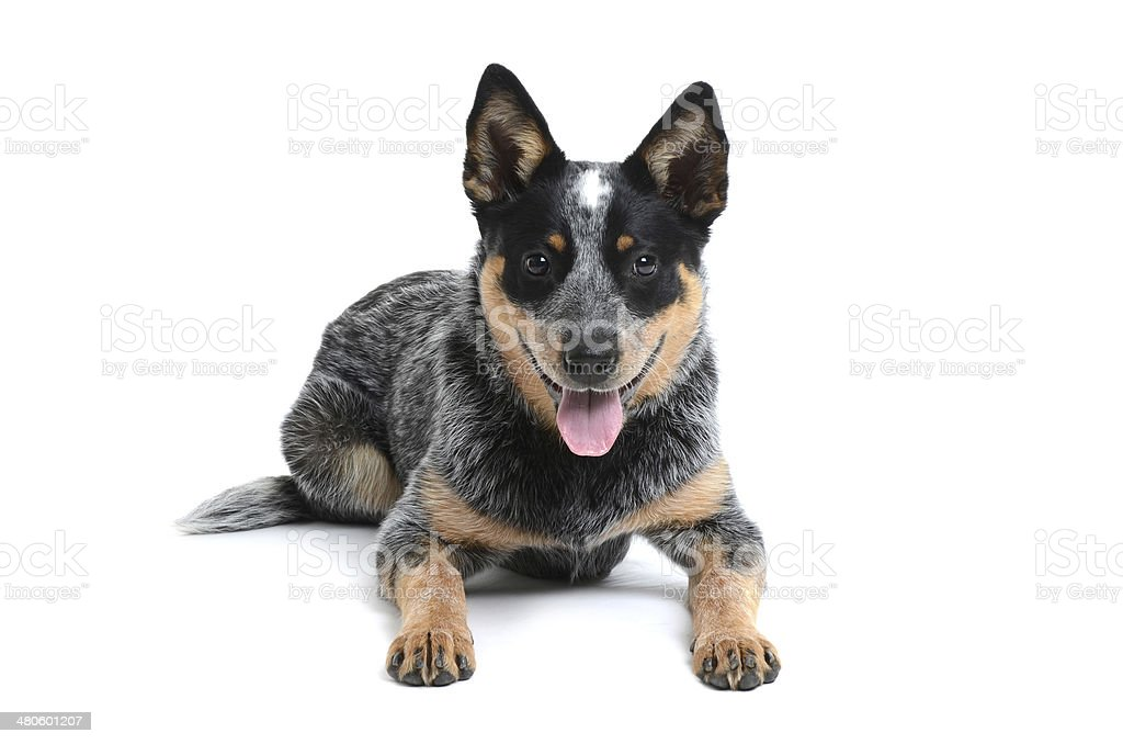 Happy Puppy stock photo