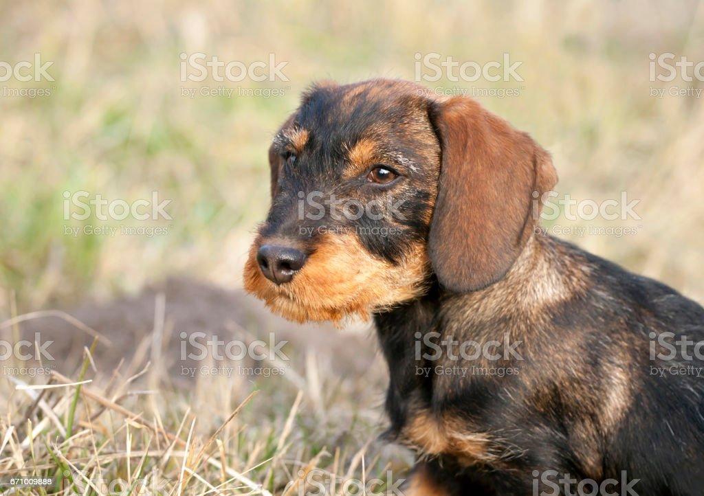 Happy puppy stock photo
