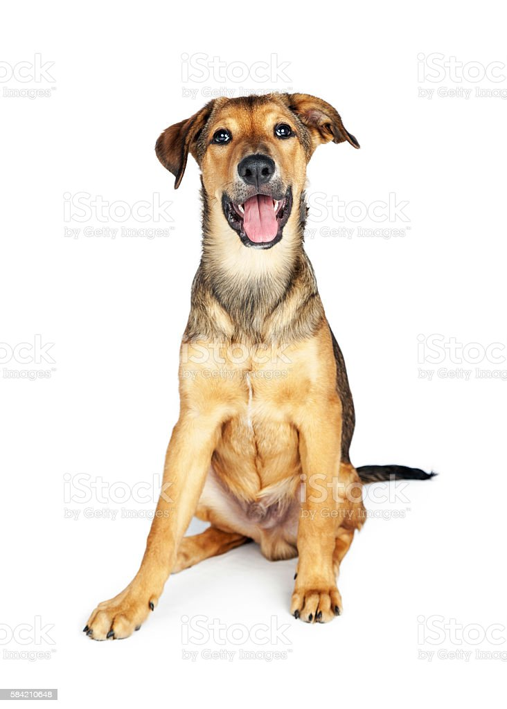 Happy Puppy Sitting Over White stock photo