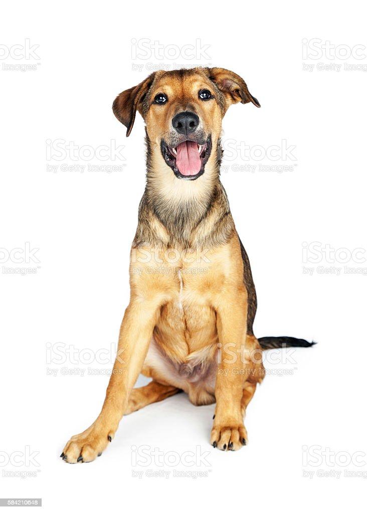 Happy Puppy Sitting Over White stock photo