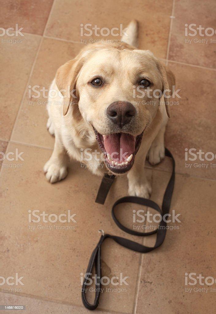 Happy puppy wants to walk stock photo