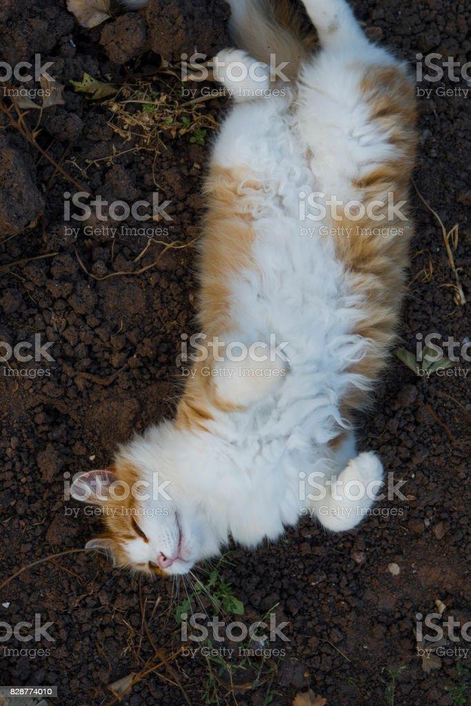 Happy red cat sleep outdoor stock photo