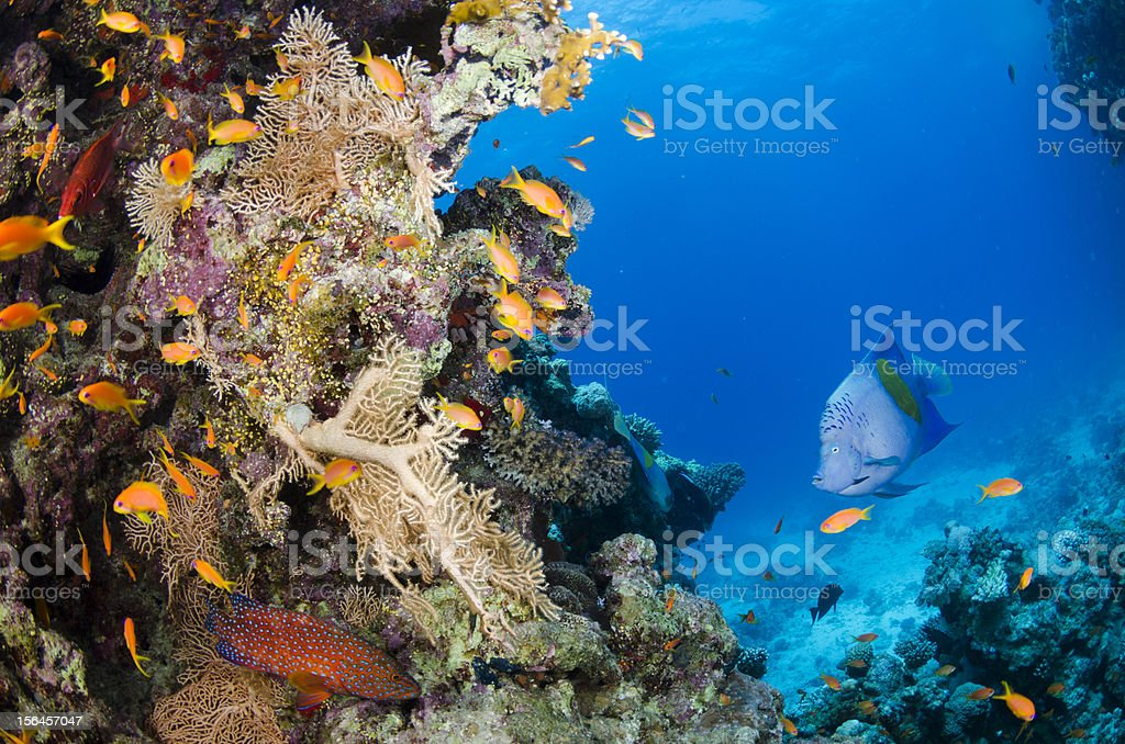 Happy reef royalty-free stock photo