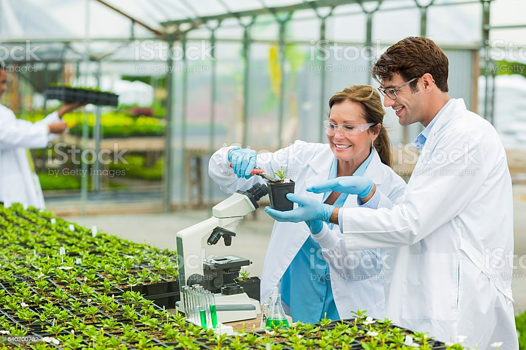 Happy scientists working in a nursery stock photo