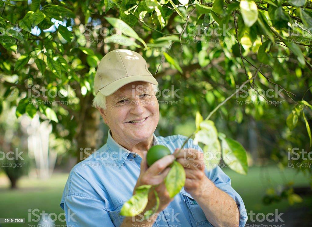 Happy senior checling his trees stock photo