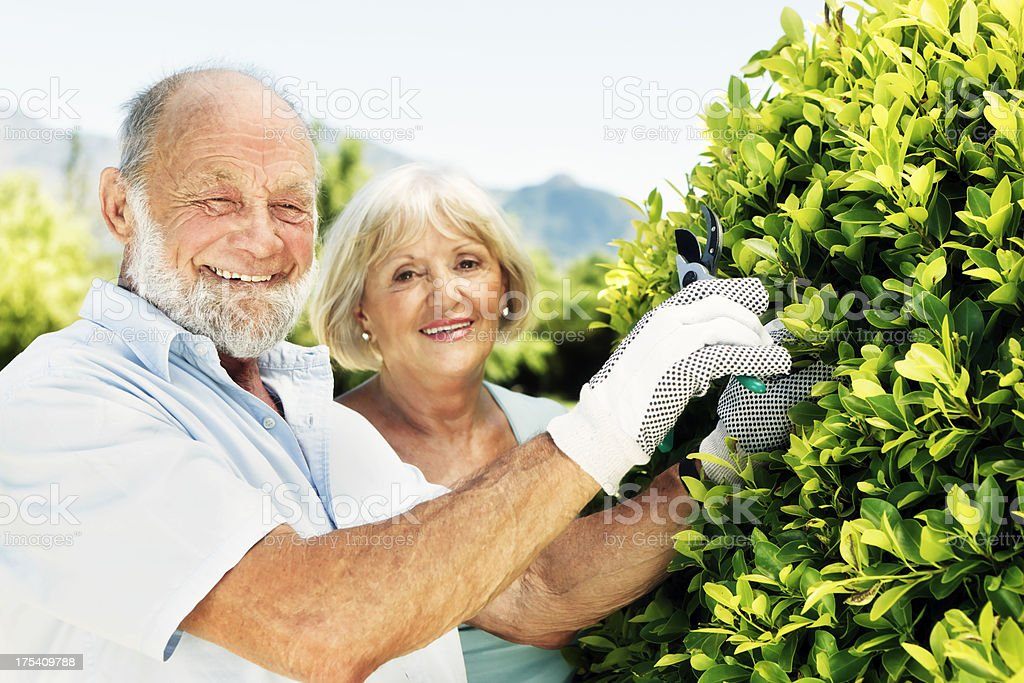 Happy senior couple enjoy gardening in the sunshine royalty-free stock photo