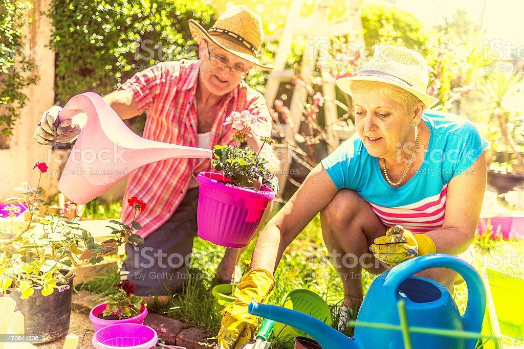 Happy senior couple gardening together stock photo