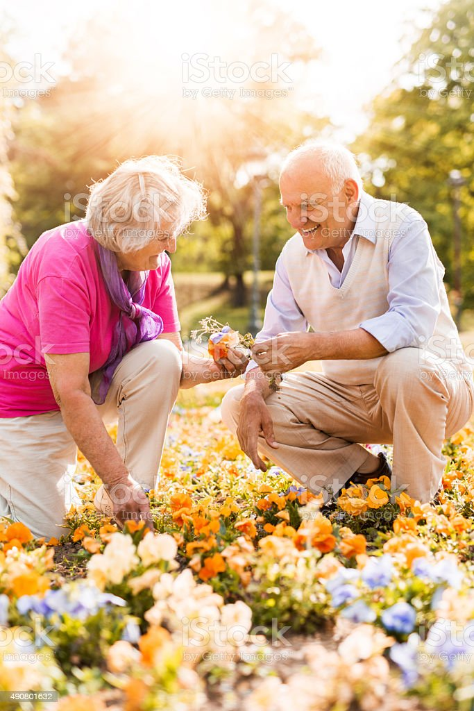 Happy senior couple working together in a garden. stock photo