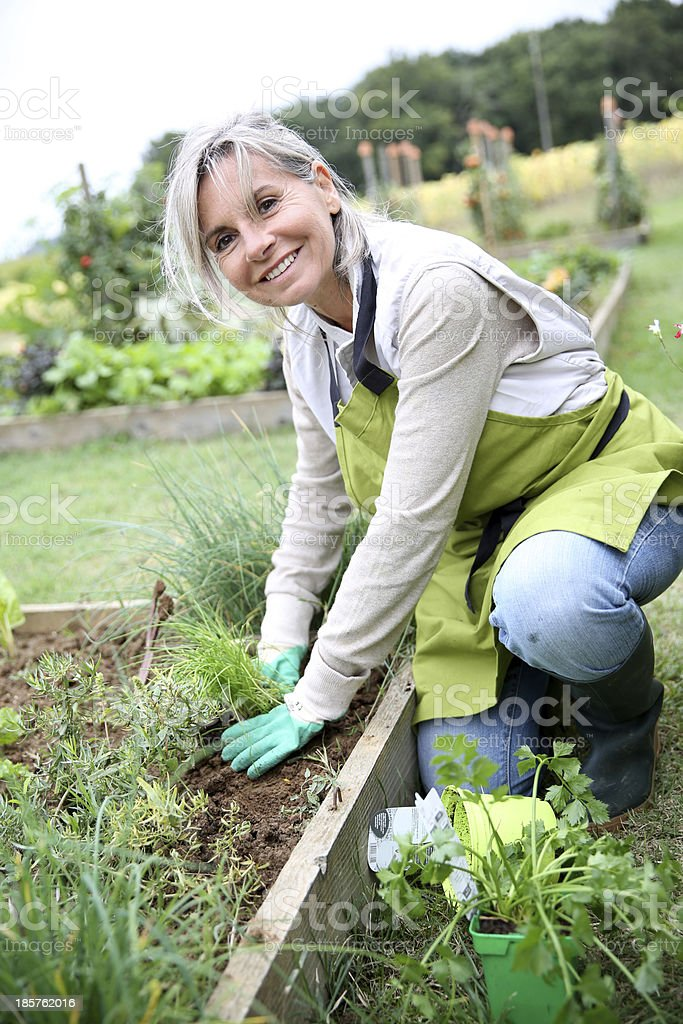 Happy senior woman gardening on sunny day stock photo