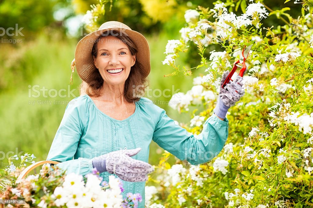Happy Senior Woman Pruning Flowers While Wearing Sun Hat stock photo
