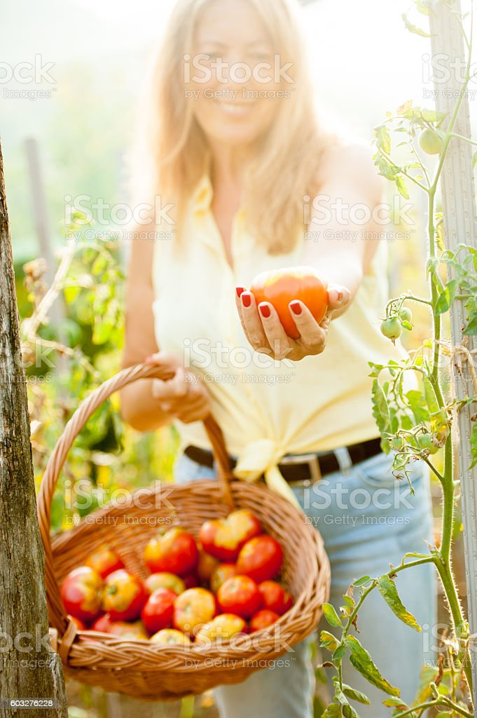 Happy Senior Woman Showing her Homegrown Tomatoes stock photo