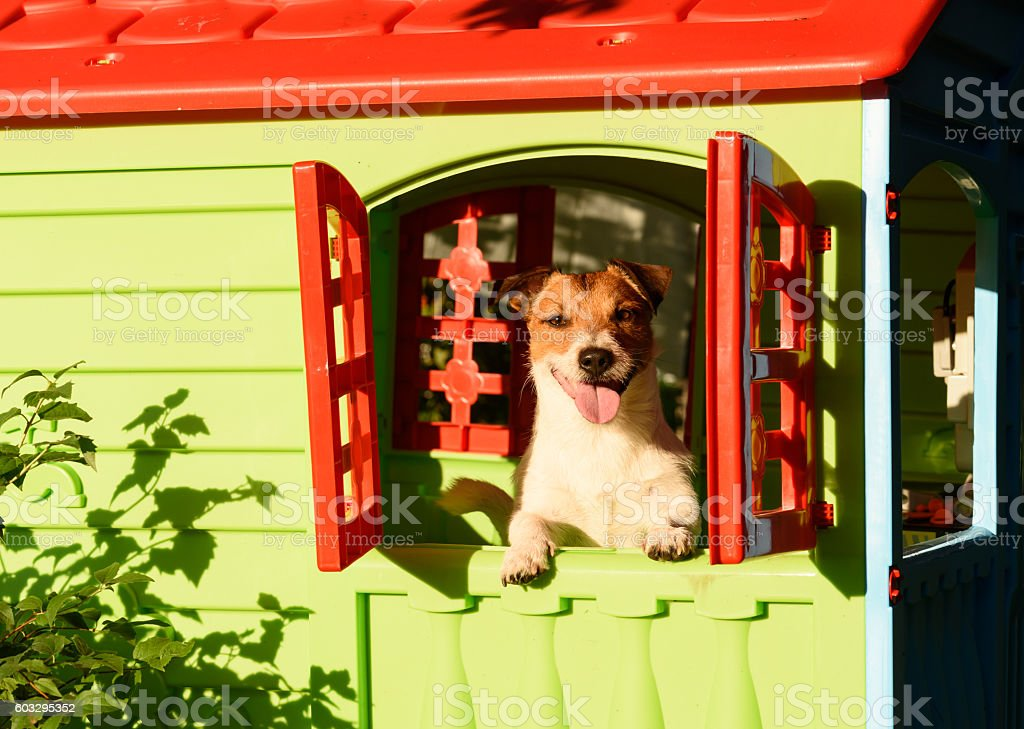 Happy smiling dog in doghouse at sunny summer day stock photo