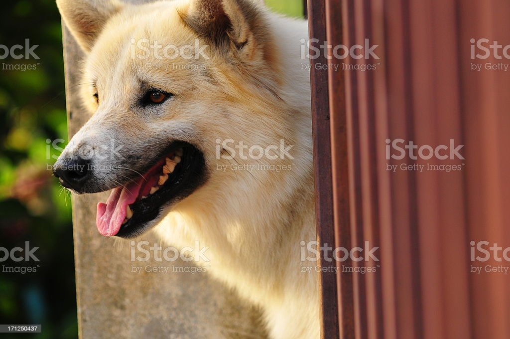 Happy smiling dog looking up stock photo