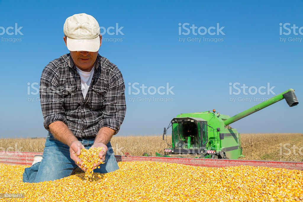 Happy smiling farmer during corn maize harvest stock photo