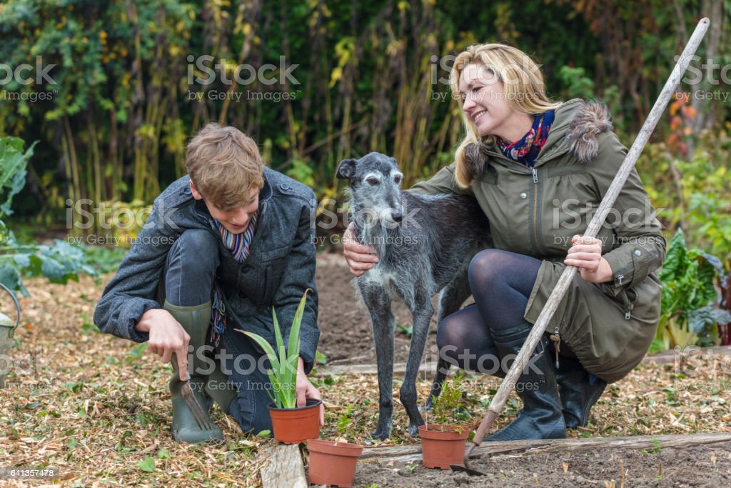 Happy smiling mother and teenage son, male boy child and woman gardening in a garden vegetable patch with their pet dog stock photo