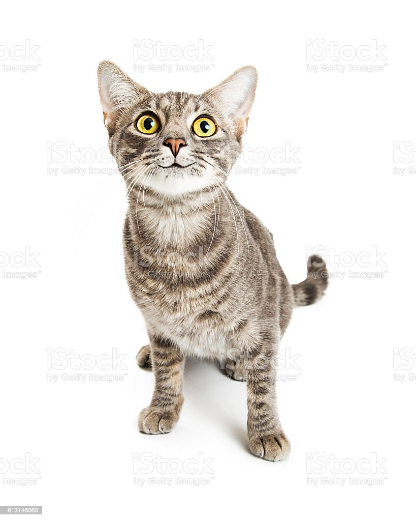 Happy Smiling Young Cat Expressive Eyes stock photo