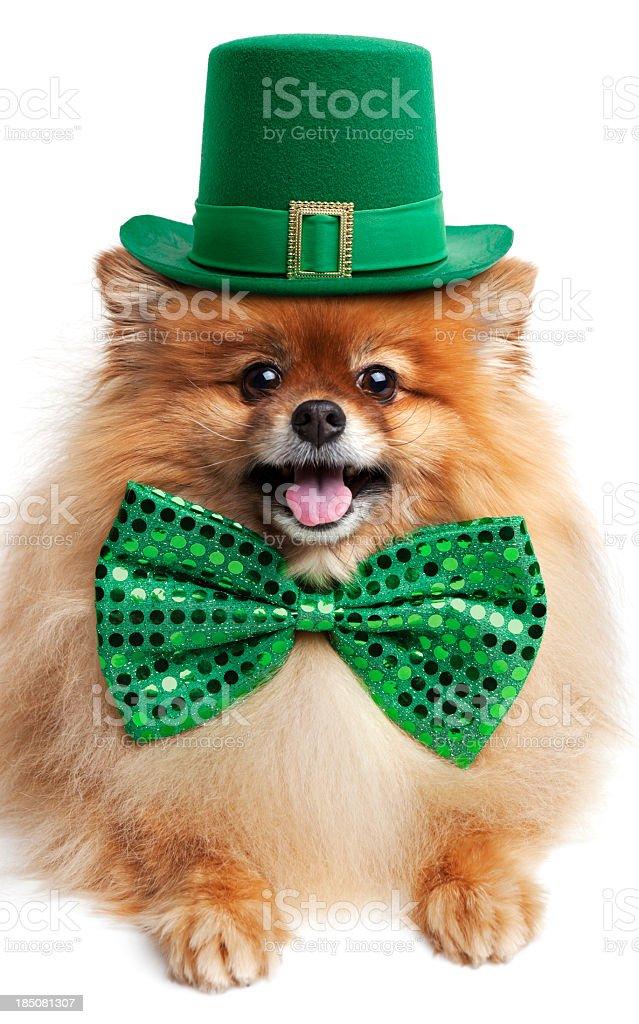 Happy St. Patrick's Day! royalty-free stock photo