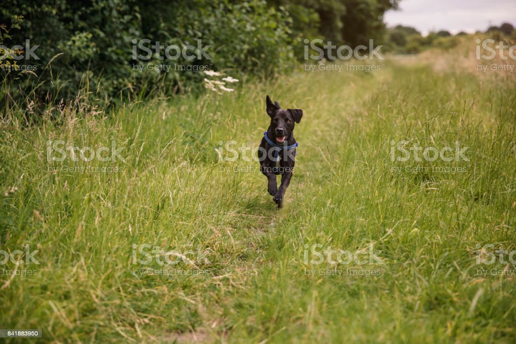 Happy Terrier in the Countryside stock photo