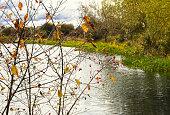 Happy walk by the pond