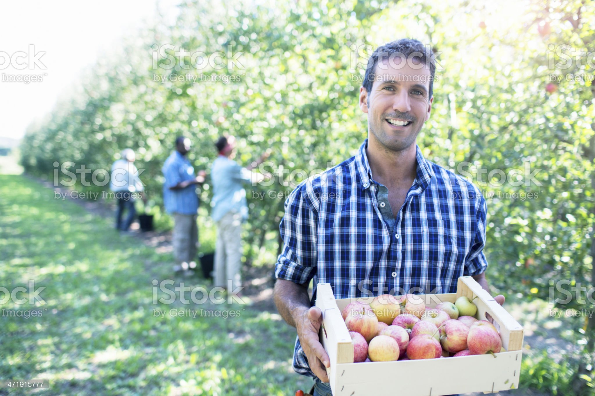 Happy with the harvesting royalty-free stock photo