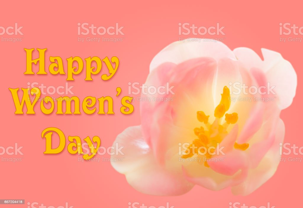 Happy Womens Day background with tulip blossom stock photo