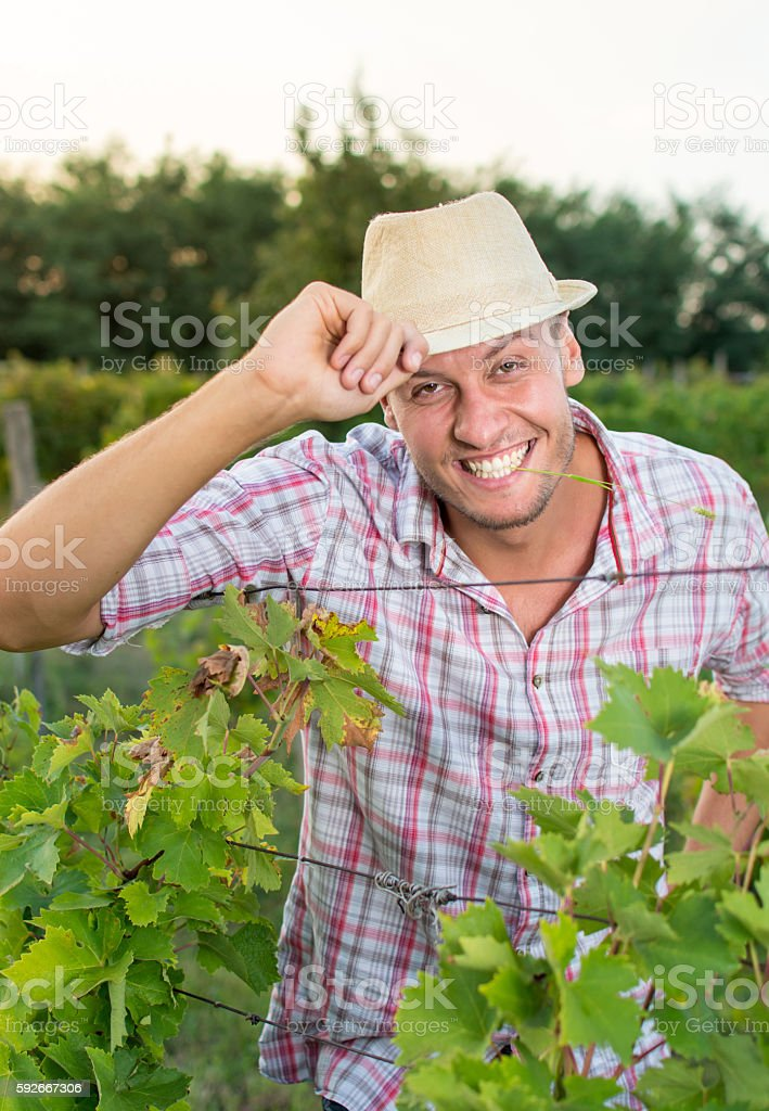 Happy young farmer at the vineyard stock photo