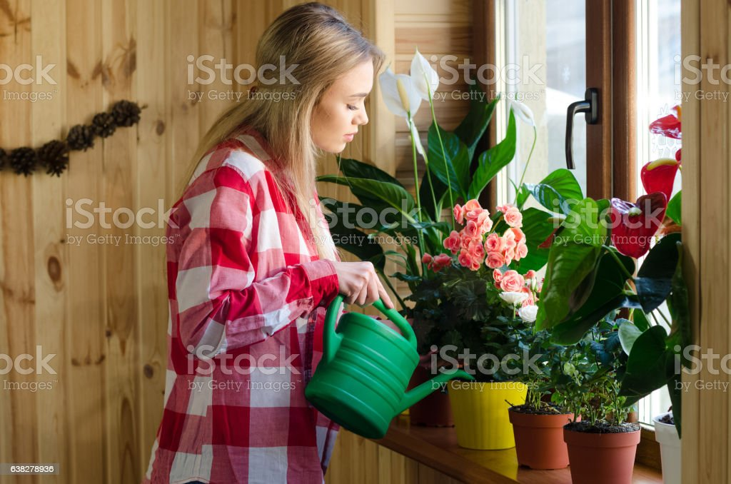 Happy young woman watering plant using sprinkling can stock photo