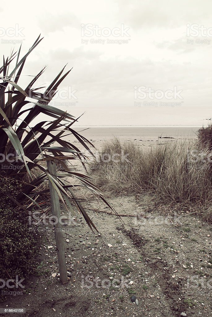 Harakeke and Path to the Beach, New Zealand/ Aotearoa stock photo