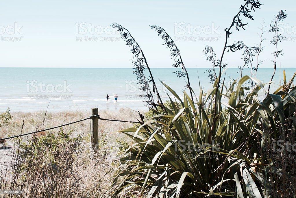Harakeke (New Zealand Flax) and Seascape stock photo