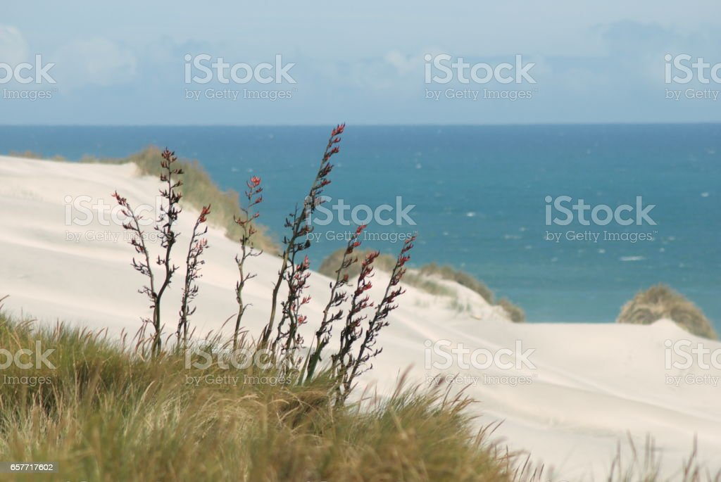 Harakeke (NZ Flax) Seascape Landscape, New Zealand stock photo