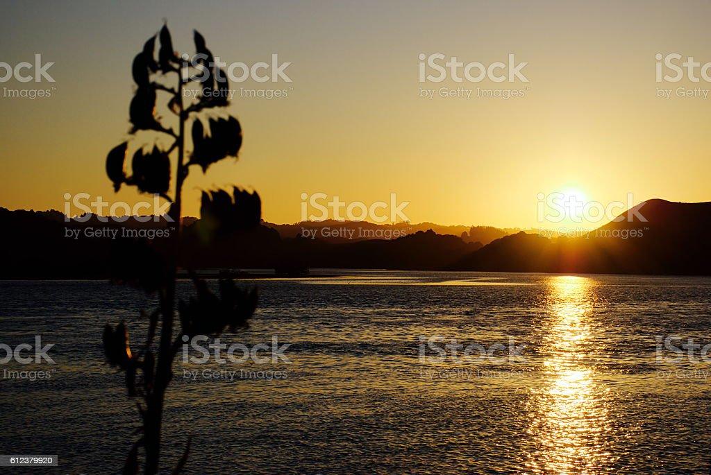 Harakeke Silhouette by Dusk, Aotearoa/ New Zealand stock photo