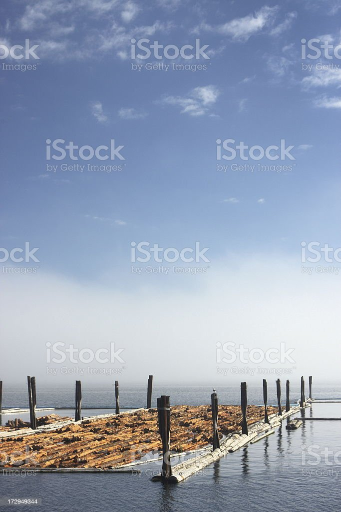 Harbor Forestry Logs Floating Pen stock photo