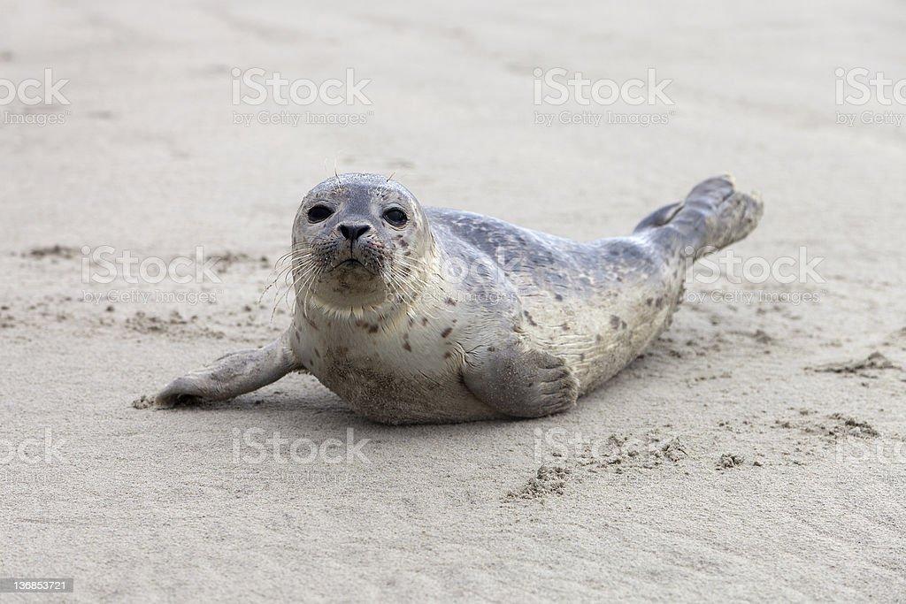 harbor seal / baby stock photo