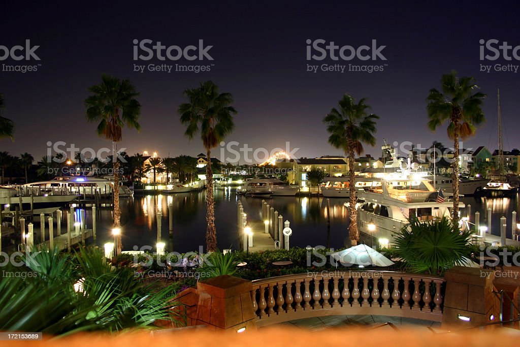 Harbor view through palm trees at night royalty-free stock photo