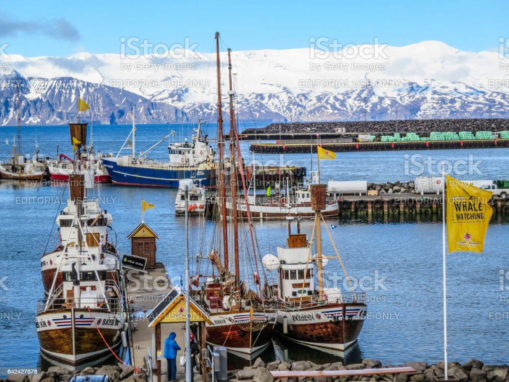 harbor with boats for whale watching in the Skjalfandi fjord stock photo