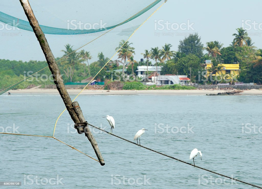 Harbour entrance and Herons, Fort Kochi, Cochin, Kerala, Southern India. stock photo