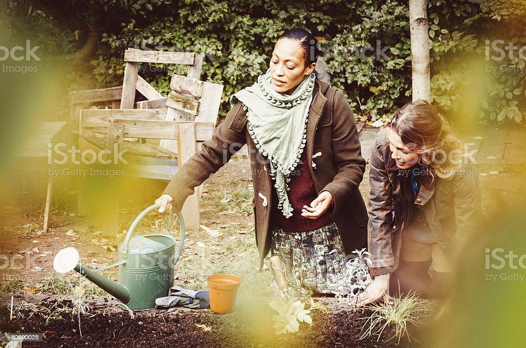 Hard Work In The Garden stock photo