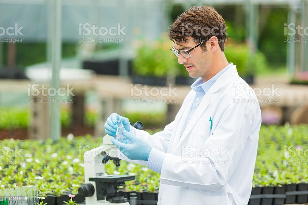 Hard working young scientist working with plants stock photo