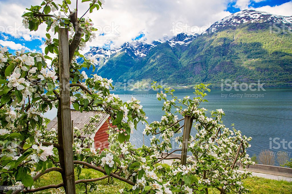 Hardanger fjord in may, Norway stock photo
