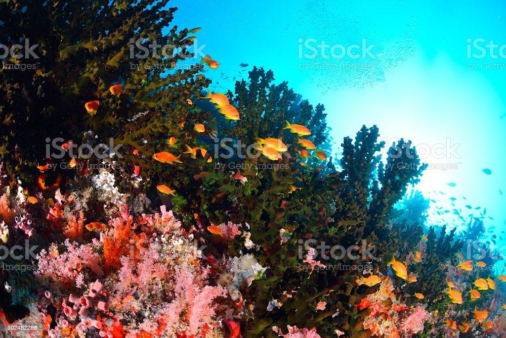 Hardcoral e peixe foto de stock royalty-free