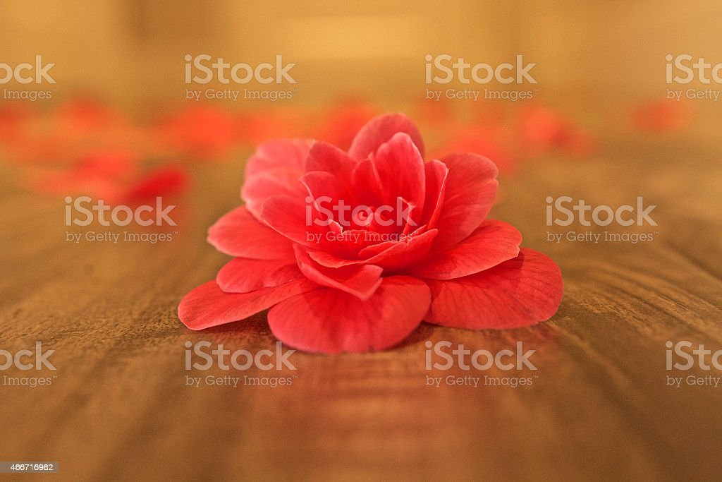 Hardwood flooring stock photo