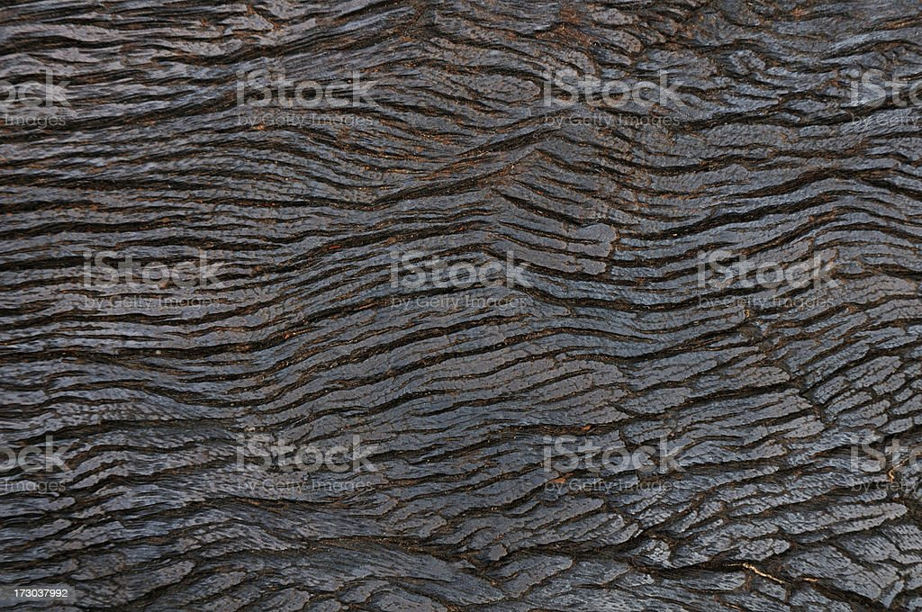 Hardwood Texture royalty-free stock photo