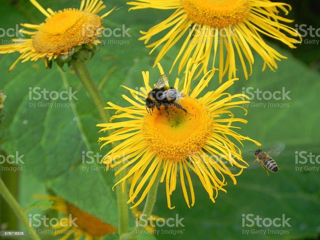 hardworking bees stock photo