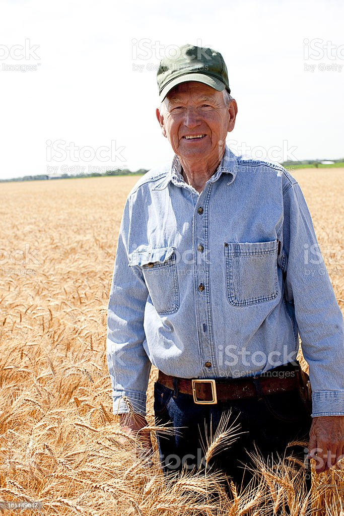 Hardworking Old Farmer Stands in Wheat Field Farm American Value stock photo