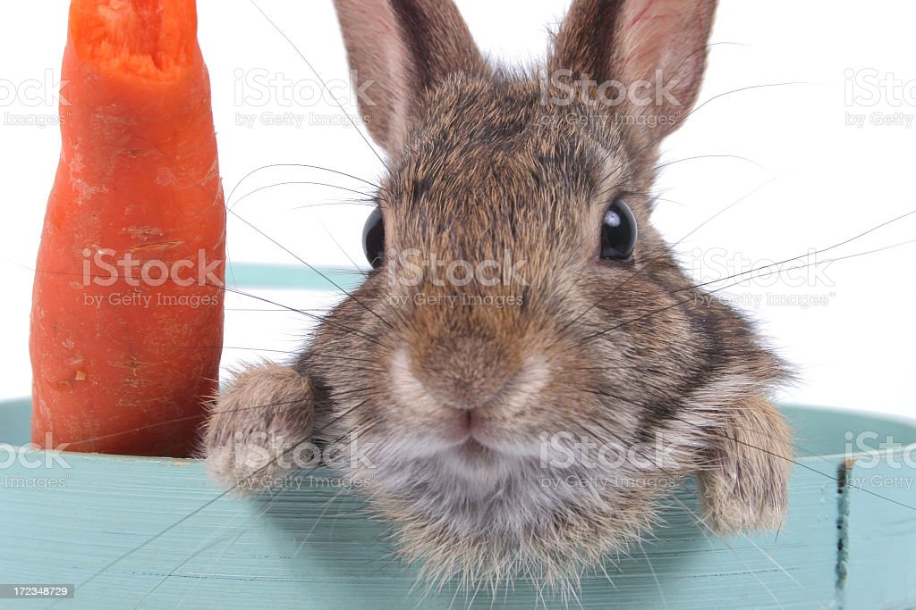 Hare and carrot stock photo