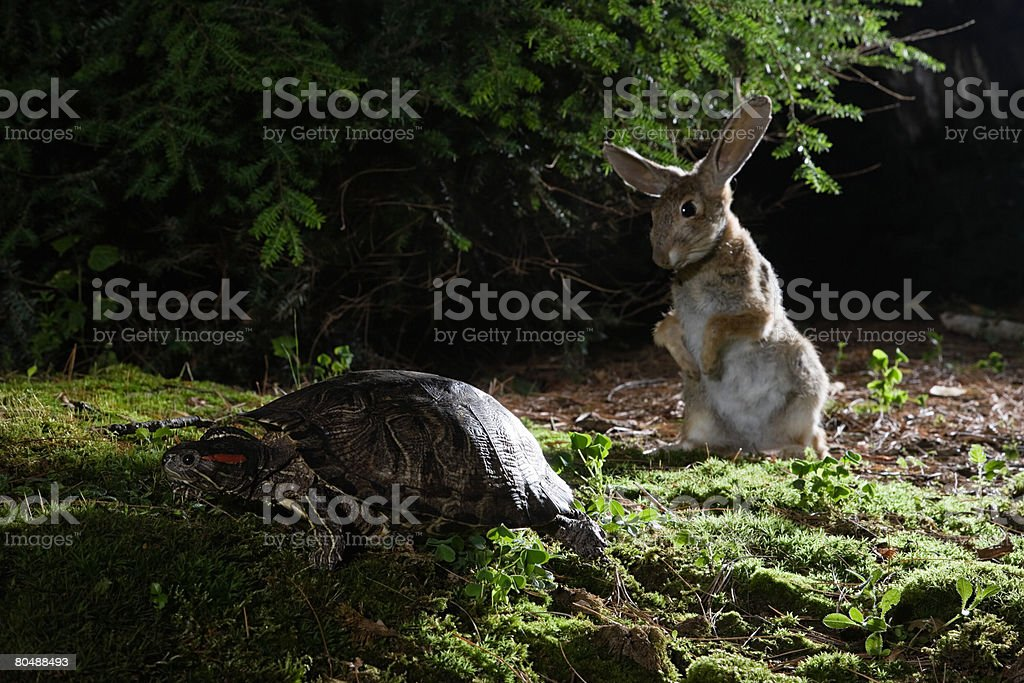 Hare and tortoise stock photo