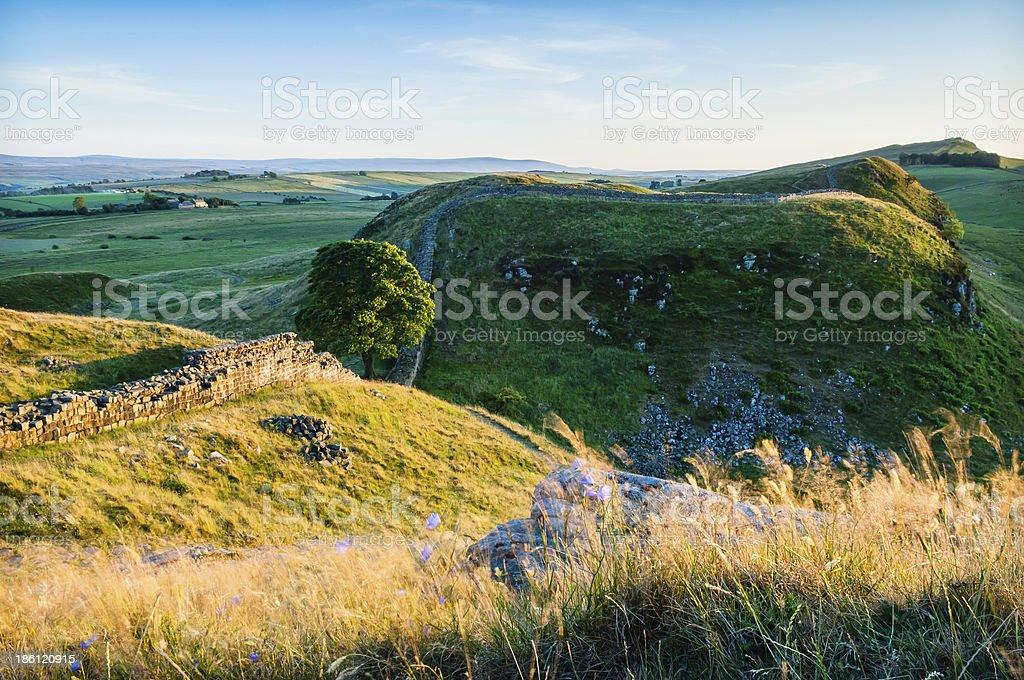 Harebells and golden grass Sycamore Gap  Hadrian's Wall Northumb stock photo
