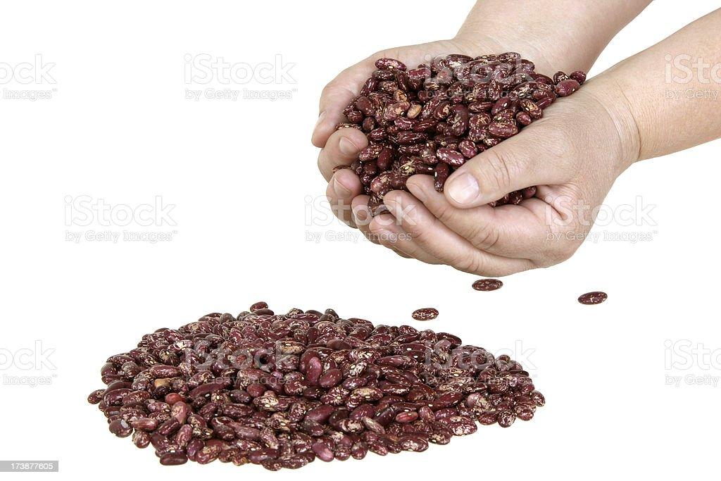 Haricot bean stock photo