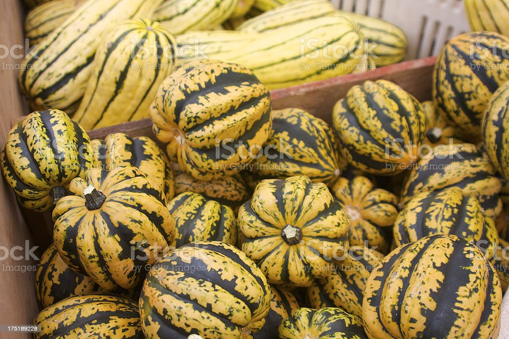 Harlequin and delicate squash royalty-free stock photo