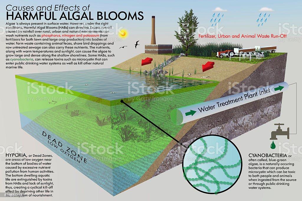 Harmful Algal Bloom Infographic stock photo
